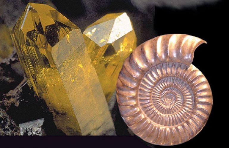 salon_mineralexpo_fossiles_fevrier_2020